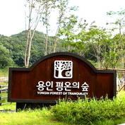 뒷짐지던 용인시, 평온의숲 사업권 넘겨받나? 주민협의체와 소송