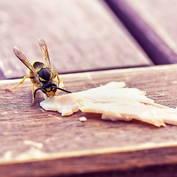 [아하!] 나도 혹시 벌독 알레르기?…벌 쏘임 사고 예방 중요