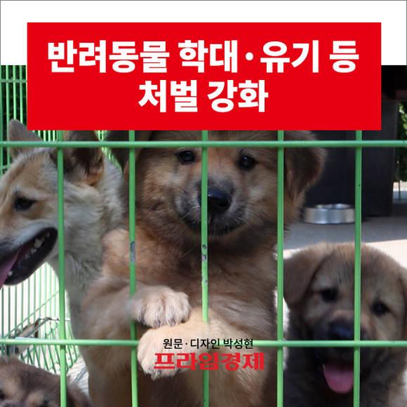 [카드뉴스] 반려동물 학대·유기…