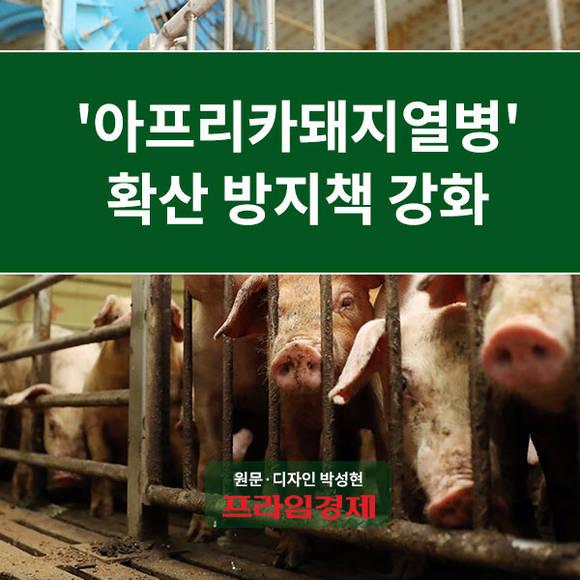 [카드뉴스] '아프리카돼지열병' 확…